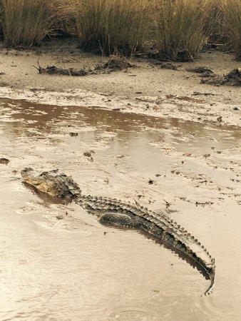 Capt Mitch's - Everglades Private Airboat Tours: We saw 2 alligators.