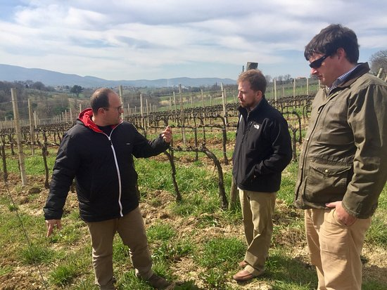 Montefalco, Italia: Learning about Sagrantino grapes