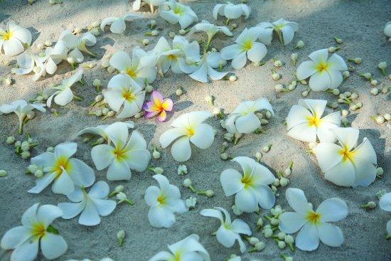 Four Seasons Resort Koh Samui Thailand : Beach Wedding Detail