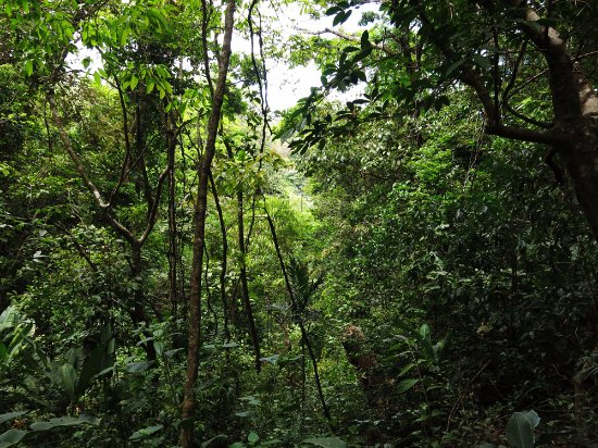 Children's Eternal Rain Forest: It's great to have a guide help you spot wildlife in the dense vegetation