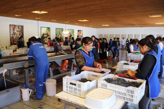 Santa Cruz, Chile: Lapostolle: uma vinícola simplesmente sensacional no Chile!