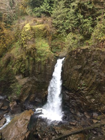 Drift Creek Falls Trail