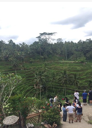 Photo of Farm Tegalalang Rice Terrace at Ubud 80517, Indonesia