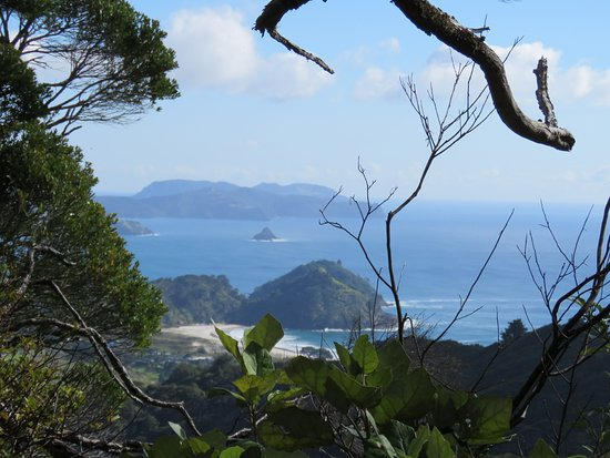 Great Barrier Island, Neuseeland: Top of the bush climb view of Medland beach