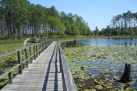 Donalsonville, GA: Boardwalk across the lake, on the nature trail.