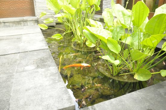 Peppers Seminyak: Fish Pond