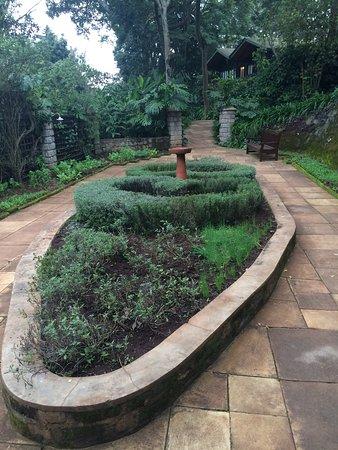 Karatu, Tanzania: Herb gardens at Gibbs Farm