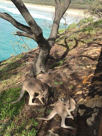 Point Lookout, أستراليا: photo2.jpg