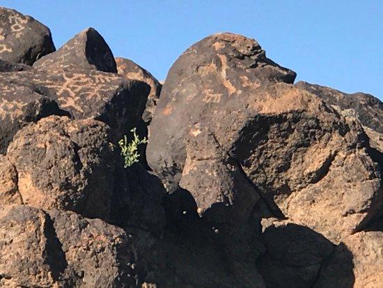 Gila Bend, Arizona: photo5.jpg