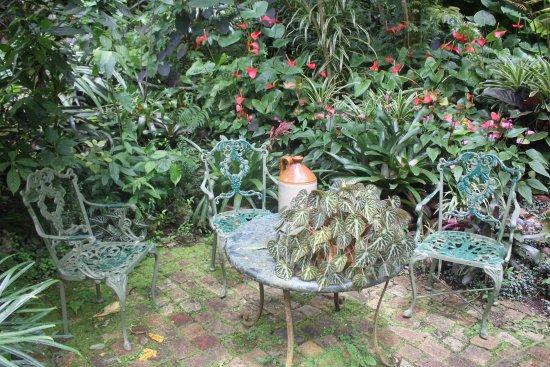 Hunte's Gardens: garden scenery