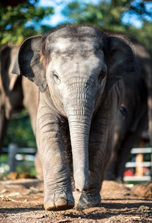 Phang Nga, Thailand: Tanwaa, 15 months old, looking very grown up.