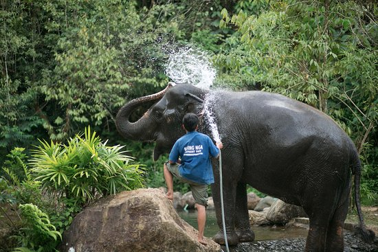 Phang Nga, Thailand: Washting and bathing time!