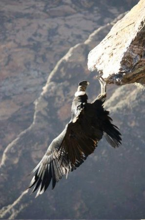 Arequipa to Colca Canyon Full-Day...