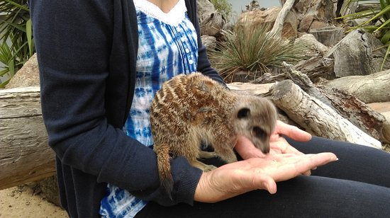 Halls Gap, Australia: Feeding the Meerkats