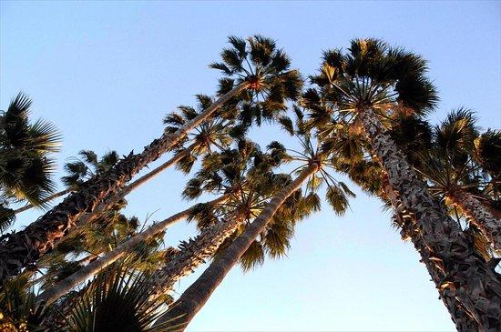 Saga Motor Hotel Pasadena Kaliforniya Otel Yorumlar Ve Fiyat Kar La T Rmas Tripadvisor
