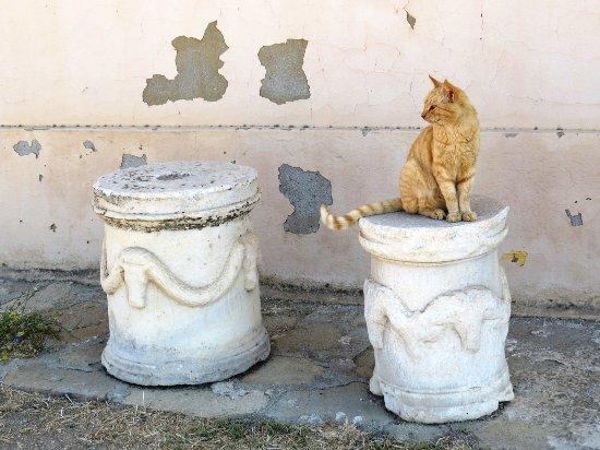 Archaeological Museum of Delos : 島には考古学者が飼っているのか?猫ちゃんが多い