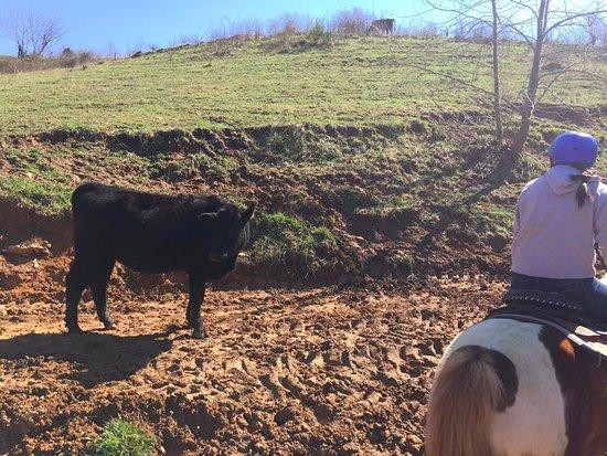 Marshall, Carolina del Norte: Mountain animals