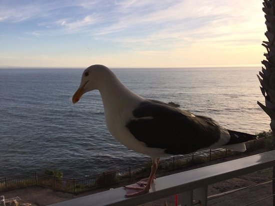 The Inn at the Cove: Mr. Seagull says howdy.