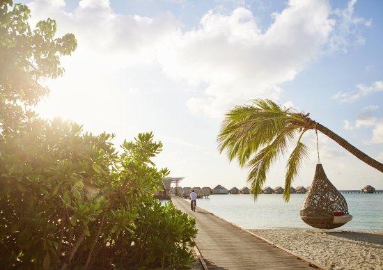 Dhidhoofinolhu Island: LSAA Nest