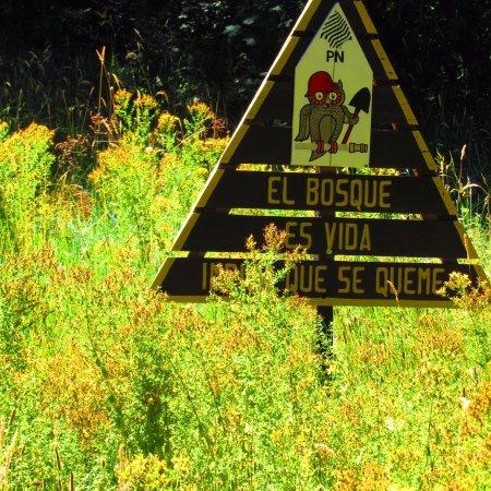 Nahuel Huapi National Park照片