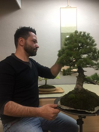 Studio Bonsai Tamburello