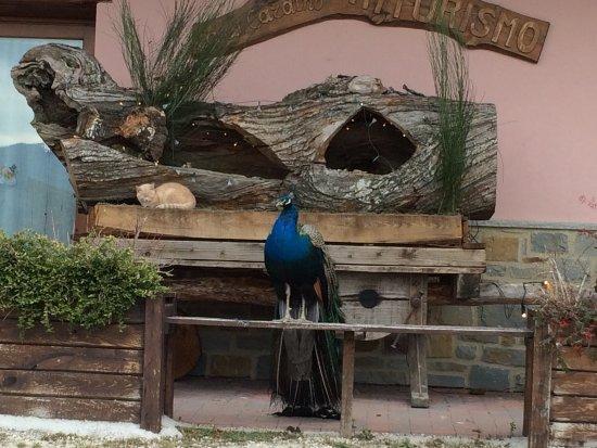 Monghidoro, Italia: Agriturismo Ca Di Cardino