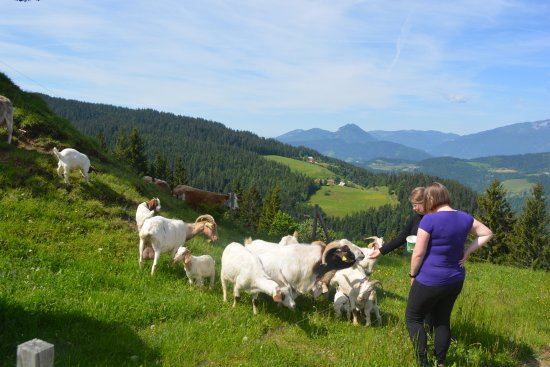 Ljubno, Slovenia: Goats on the farm