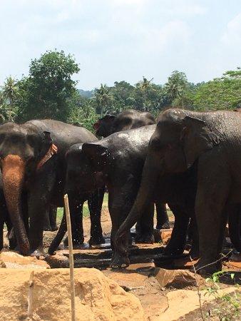 Katunayake, Sri Lanka: photo8.jpg