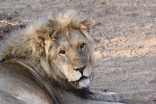 Erindi Game Reserve, Namibia: photo4.jpg