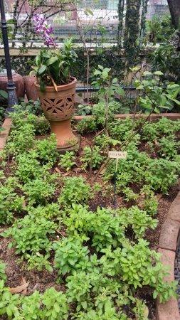 Amita Thai Cooking Class: Garden