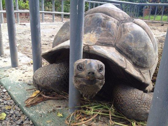 Berjaya Beau Vallon Bay Resort & Casino - Seychelles: Turtles