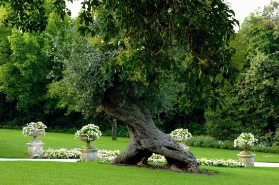 Corrubbio di Negarine, Italia: Park