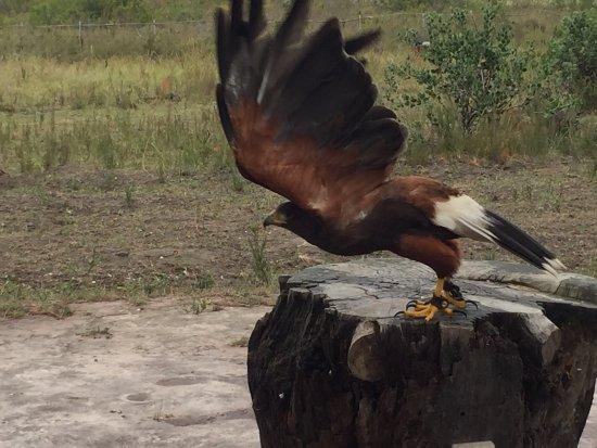 Radical Raptors: photo3.jpg