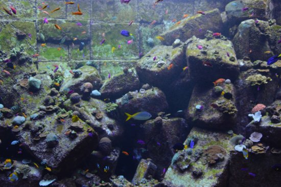 The Lost Chambers Aquarium: Colourful fish