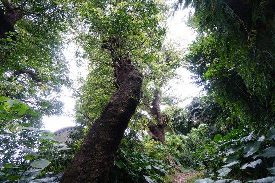 Shrikinjocho Stone-Path Road : photo3.jpg