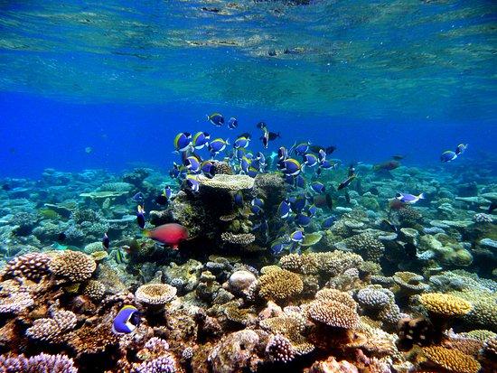 Ukulhas: Snorkeling