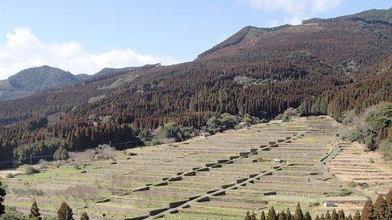 Sakamoto Rice Terrace