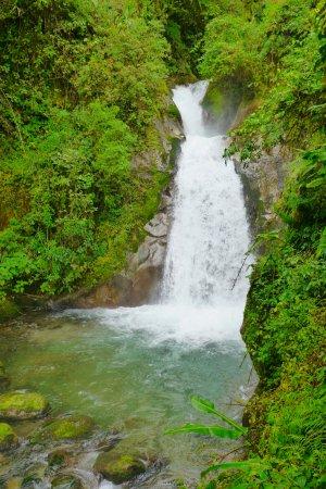 Chirripo National Park照片