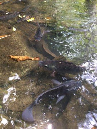 photo3.jpg - Bild från Catfish Farm, Ao Nang - TripAdvisor