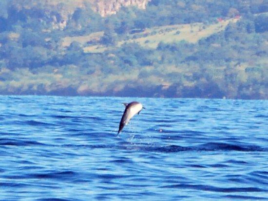 Trois-Ilets, Martinique: dauphins tacheté