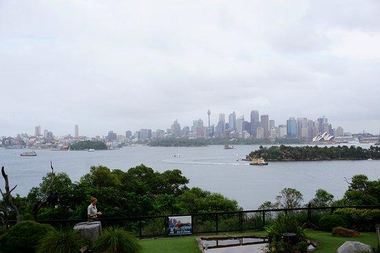 Mosman, Australien: The view at the bird talk.