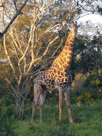 Hluhluwe, Republika Południowej Afryki: photo1.jpg