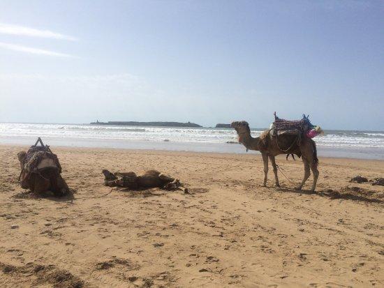 Essaouira Beach: photo2.jpg