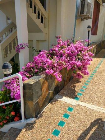 Foto de Orchidacea Resort