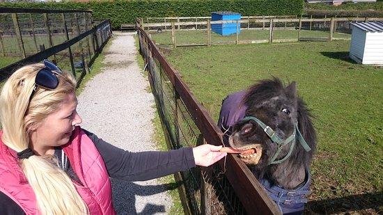 C & J's Animal Park