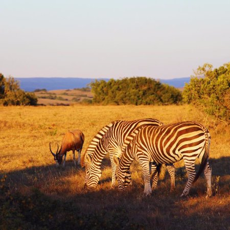 Foto de Addo Elephant National Park