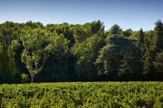 Lauris, France: Vineyard