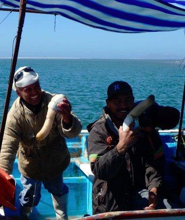 Puerto San Carlos, เม็กซิโก: Geoduck clams