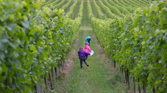 Albury, UK: The vineyard toy trail is a hit with little ones!