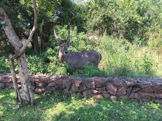 Malelane, South Africa: photo4.jpg